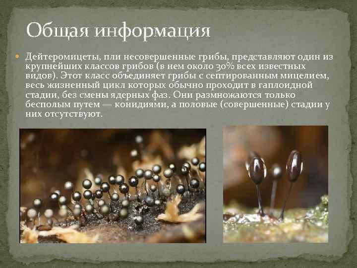 Несовершенные грибы: представители