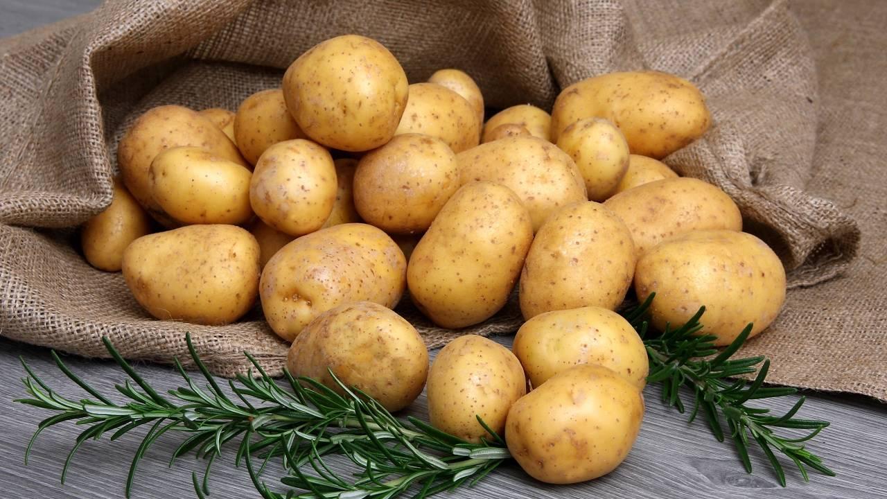 Адретта – картофель, являющийся эталоном вкуса. характеристика сорта, фото, особенности выращивания