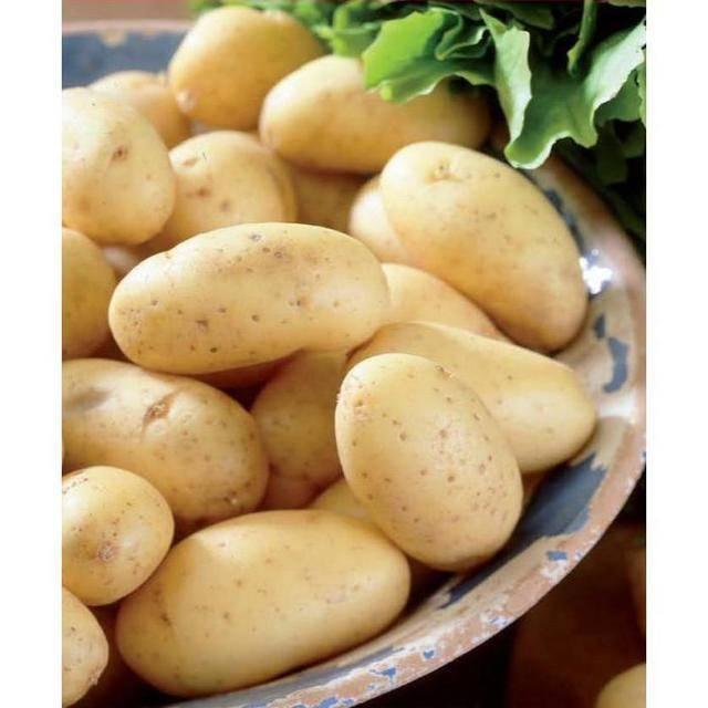 Картофель коломбо: описание, отзывы, характеристики