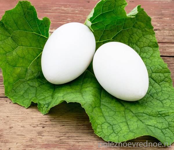 Польза и вред гусиных яиц и главное отличие от куриных