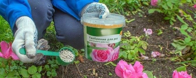 Подкормка роз весной - органика, минеральные, народные средства