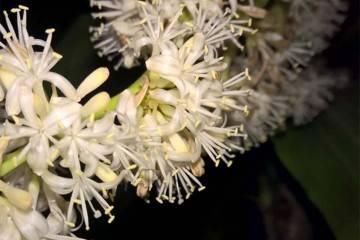 Почему не цветут рябчики? ошибки в уходе