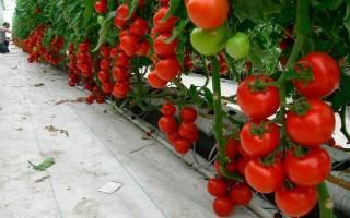Что дает формирование томатов и как это правильно сделать? подробная схема