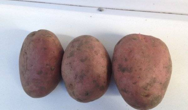 Картофель лабелла: характеристики, описание сорта, фото