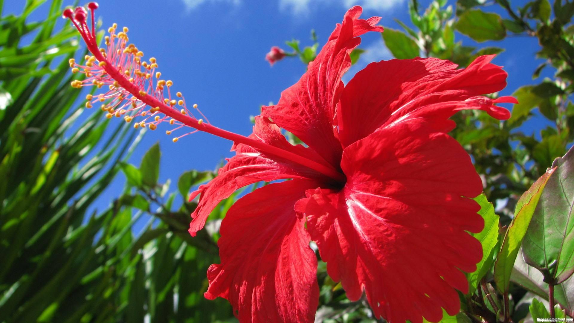 Хойя (восковой плющ): уход в домашних условиях, фото и названия видов, размножение, цветение + фото и видео