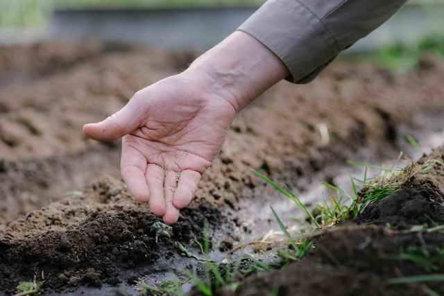 Выращивание рассады перца: посев, уход, пикировка