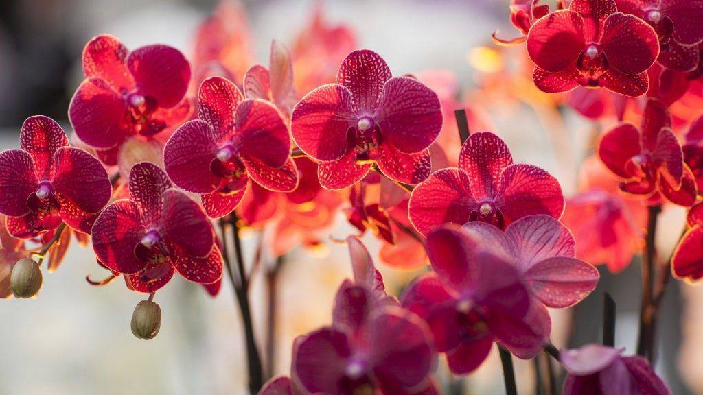 Болезни орхидеи с фото и их лечение в домашних условиях