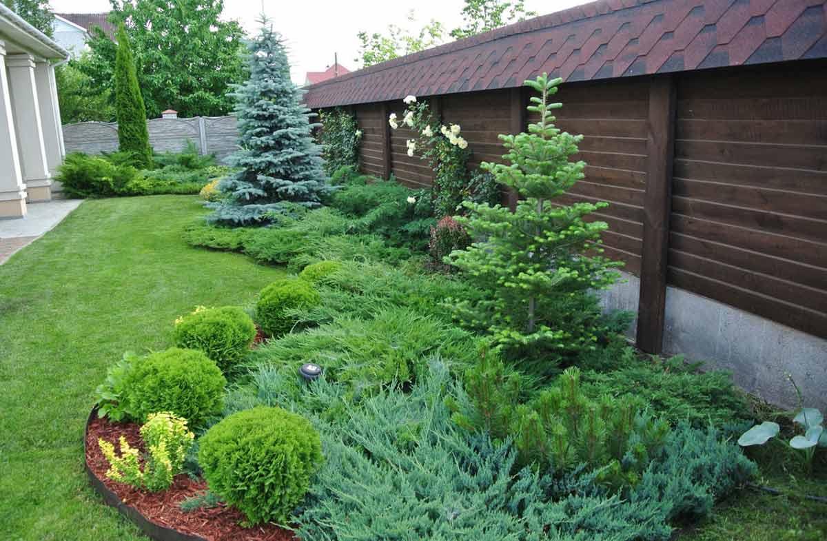 Какие бывают декоративные хвойные деревья и кустарники?