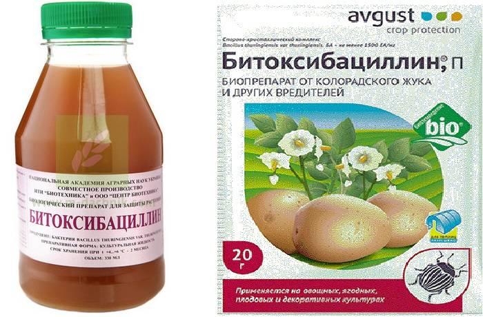 Битоксибациллин: инструкция по применению инсектицида для растений от вредителей, отзывы о препарате