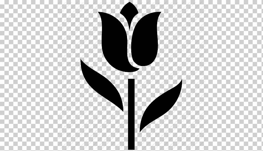 Описание топ-20 самых красивых сортов и видов тюльпанов, их посадка и уход