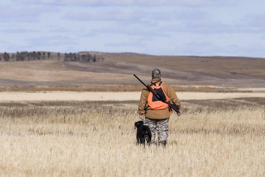 Правила охоты на перепела