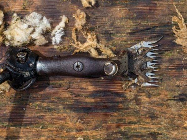 Ножницы для стрижки овец: особенности выбора моделей, техника стрижки животного