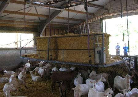 Сарай для коз — как построить козлятник (хлев) своими руками: размер стойла, устройство помещения для содержания животных внутри — moloko-chr.ru