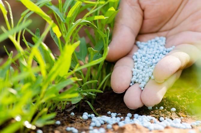 Фосфорные удобрения для роста и пышного цветения
