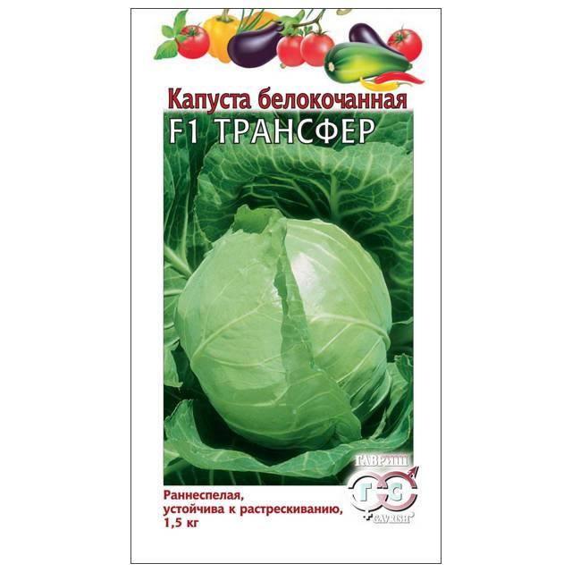 Как посадить капусту сорта трансфер: подробное описание
