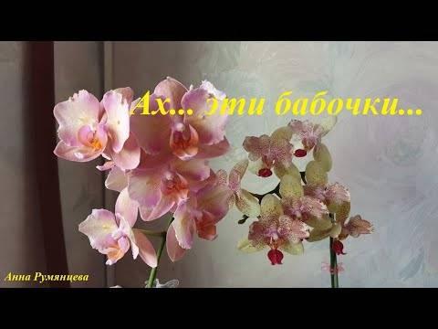 Орхидея пелорик: фото, разновидности и уход в домашних условиях . милая я