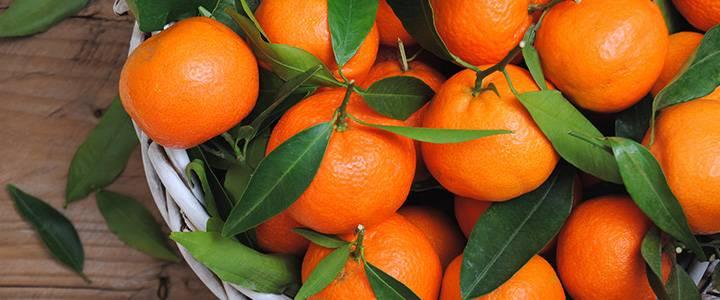 Чем полезны мандарины для здоровья – 11 доказанных свойств