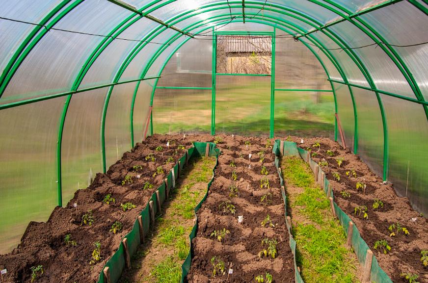 Выращивание перца в теплице из поликарбоната: формирование, полив, уход - пошаговая инструкция (видео)