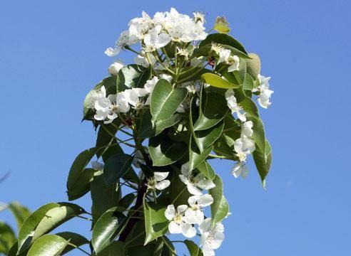 Уход за садом весной, удобрение растений, обработка от болезней вредителей