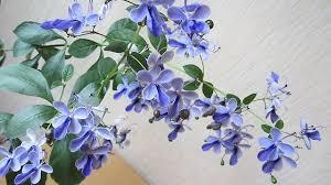 Клеродендрум угандийский: описание и фото растения с голубыми цветами, размножение и уход за клеродендроном в домашних условиях русский фермер