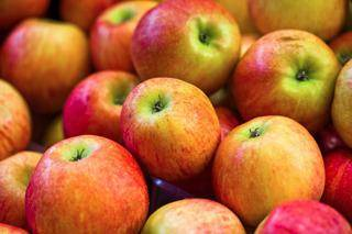 Колоновидные яблони для подмосковья и московской области: описание сортов с фото и отзывами