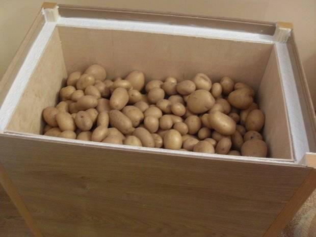 Как хранить картошку в квартире, чтобы не прорастала