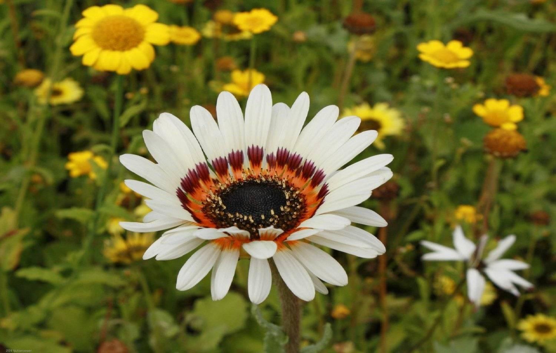 Венидиум — выращивание из семян в домашних условиях + фото