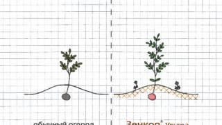 Зенкор – гербицид системного действия против сорняков |