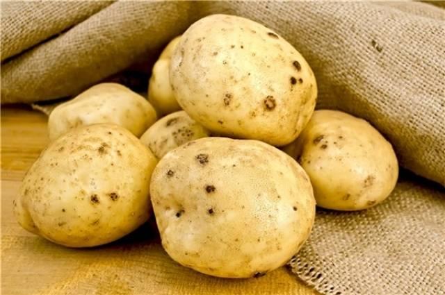 Нематода картофеля: виды, описание и лечение, как бороться, фото