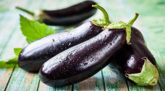 Лучшие сорта баклажанов - 15 самых крупных, вкусных, урожайных для теплицы и открытого грунта