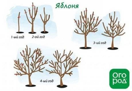 Обрезка старых яблонь, когда и как лучше ее делать, в том числе для начинающих, а также особенности формирования кроны на данном этапе