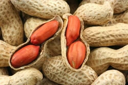 Как посадить арахис на огороде в средней полосе россии и в подмосковье + фото и видео