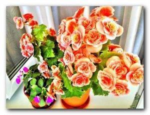 Комнатные цветы с фото и их название: разновидности комнатных цветов, уход за ними