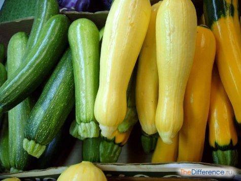 Как отличить рассаду кабачков от тыквы + фото