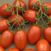 Как подкормить томаты золой: эффективные способы применения