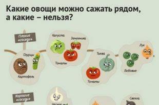 Что можно сажать рядом с томатами, помидорами в теплице: культуры которые нельзя сажать рядом с помидорами: советы садоводов | inwomen