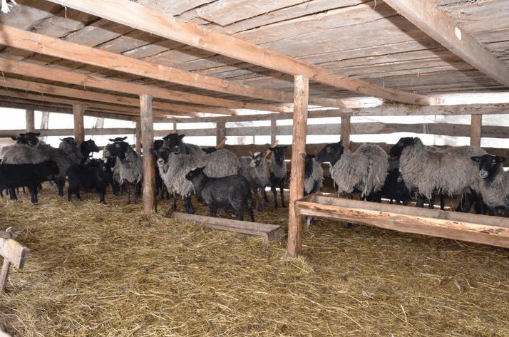 Загон для овец: как правильно называется жилище для баранов и овец? как построить большую кошару? как обустроить овчарню?