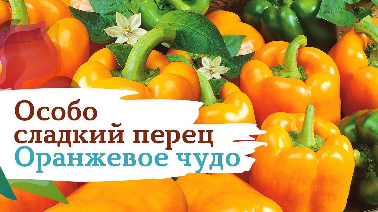 Перец оранжевое чудо: описание, выращивание, уход, фото