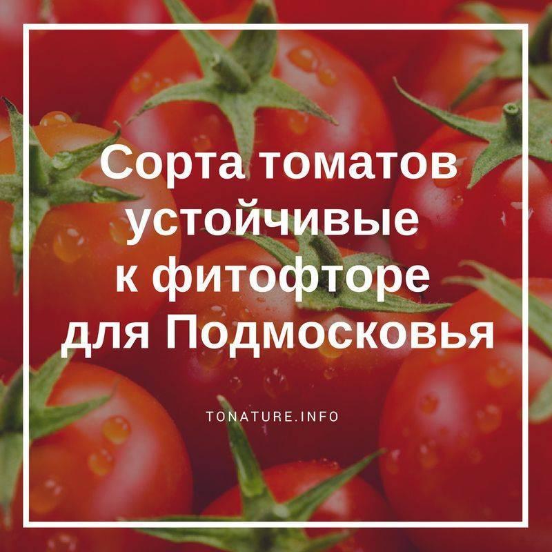 Сорта устойчивые к болезни помидор