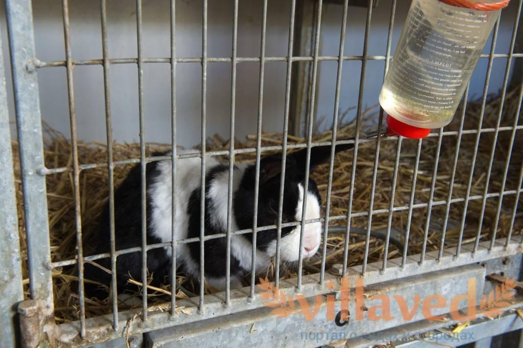 Как поить кроликов зимой при уличном содержании, если вода замерзает