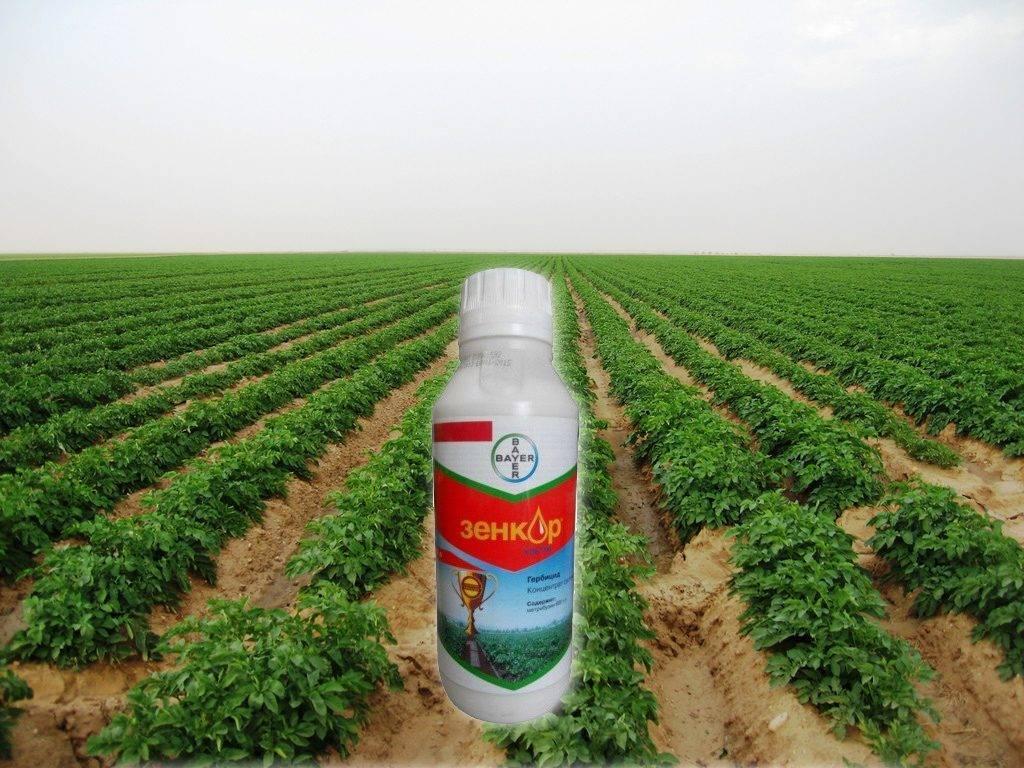 Препарат зенкор для картофеля: инструкция по применению на картофеле, свойства и эффективность, отзывы