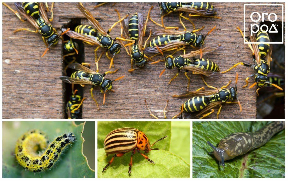 Инсектициды — препараты для борьбы с вредителями растений