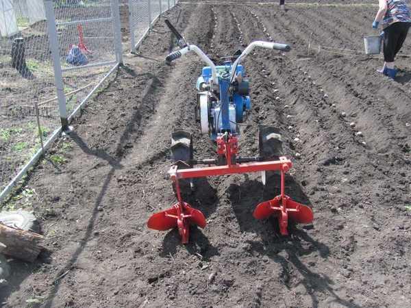 Как выбрать мотоблок для посадки и выращивания картофеля