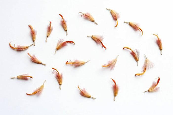 Выращивание герберы из семян в домашних условиях - theflowers