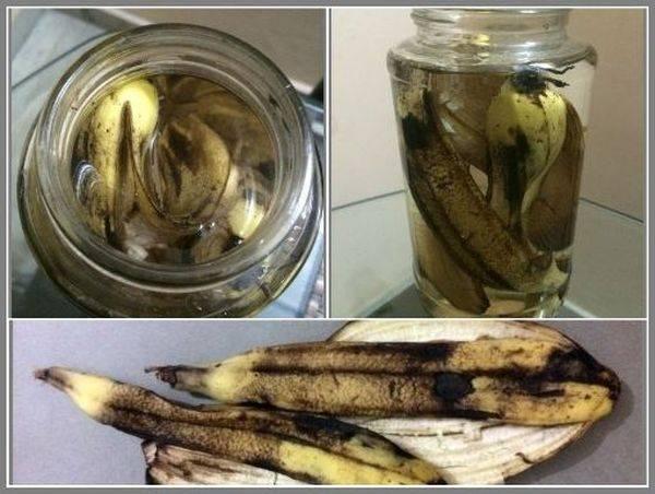 Банановая кожура как удобрение для комнатных растений - рецепты для подкормки