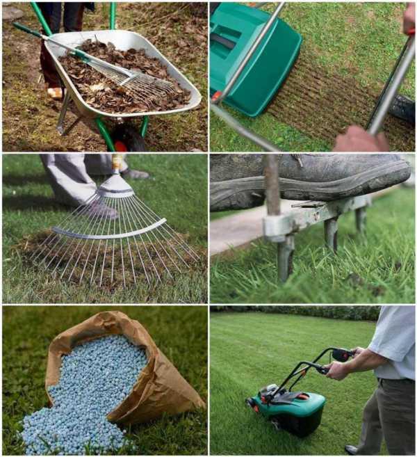 Посадка газонной травы: способы посева семян, уход и подкормка