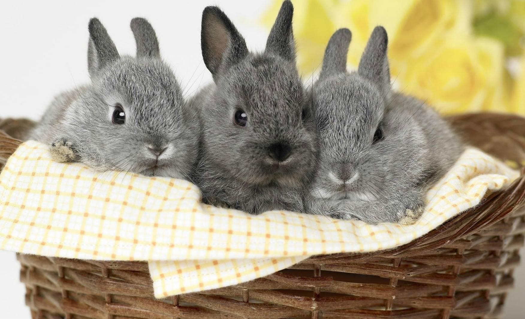 Разведение кроликов: открытие бизнеса по торговле мясом