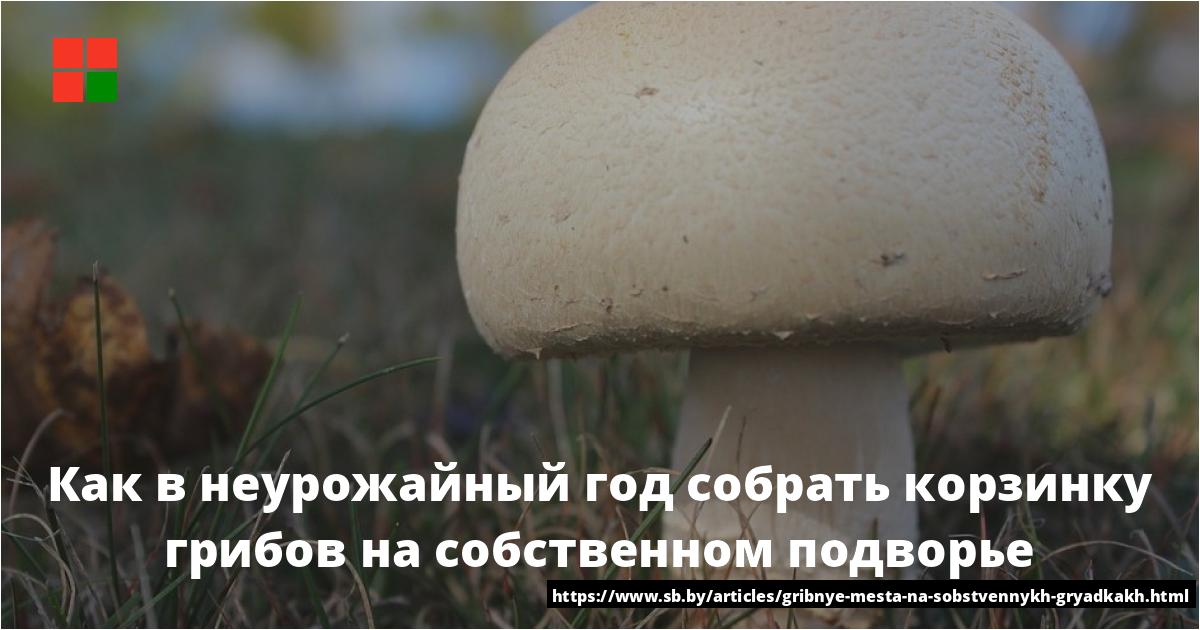 Грибы белгородской области: фото и названия съедобных и ядовитых, карта грибных мест белгородчины