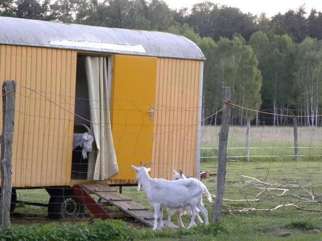 Сарай для коз своими руками: этапы строительства, требования к обустройству