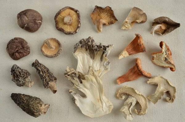 Сушеные грибы: как приготовить и использовать